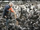 https://www.noelshack.com/2015-45-1446925842-67-mozaiek-feeding-the-pigeons.jpg