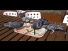 http://www.noelshack.com/2015-49-1449239807-pigeon-festin.jpg