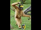 http://www.noelshack.com/2016-21-1464024522-gibbonkicks.jpg