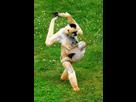 http://www.noelshack.com/2016-21-1464025143-gibbon-bb.jpg