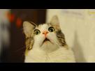 http://image.noelshack.com/fichiers/2016/22/1464777125-cat-1-jpg.jpg