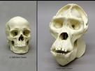 http://www.noelshack.com/2016-22-1464987549-skulls4.jpg
