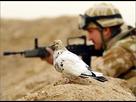 https://www.noelshack.com/2016-45-1478962154-war-pigeon-0.jpg