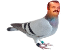 http://image.noelshack.com/fichiers/2016/50/1481647367-pigeon.png