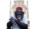 https://image.noelshack.com/minis/2016/50/1481665375-pnl-singe.png