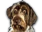 https://image.noelshack.com/fichiers/2017/01/1483656126-chiensticker.png