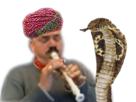 http://image.noelshack.com/fichiers/2017/06/1486469678-risitascharmeurdeserpents.png