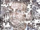 http://image.noelshack.com/fichiers/2017/11/1489501219-macron-resize.gif