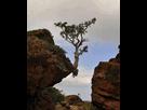 https://www.noelshack.com/2017-12-1490212229-arbre-solitaire.jpg