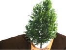 http://image.noelshack.com/fichiers/2017/18/1494190790-risitas-arbre-ingenieurjvc.png