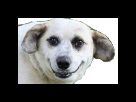 https://image.noelshack.com/minis/2017/22/1496335567-chiensourire.png