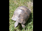 Id et sexage d'une tortue turque  1496842940-img-20170607-151042