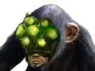 https://image.noelshack.com/fichiers/2017/27/3/1499207845-chimpanster-yi.png