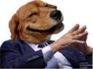 http://image.noelshack.com/fichiers/2017/30/2/1500976485-dogperplex.png