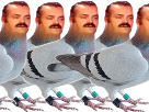 http://image.noelshack.com/fichiers/2017/30/2/1500988379-5-pigeon.png