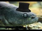 https://image.noelshack.com/fichiers/2017/33/1/1502681830-silure-gentleman-monocle.jpg