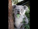https://www.noelshack.com/2017-33-2-1502834355-surprised-koala.jpg
