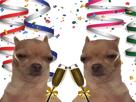 http://image.noelshack.com/fichiers/2017/49/2/1512491960-chien-fete.png