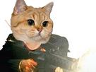 http://image.noelshack.com/fichiers/2018/02/7/1515921178-cat8.png