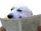 https://image.noelshack.com/fichiers/2018/04/5/1517003045-dog-journal.png