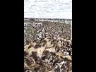 https://image.noelshack.com/fichiers/2018/05/2/1517335128-mouton-troupeau-pigeon-gif-by-jyoopo.gif