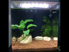 Aquarium du futur popoy 1517743240-img-0134