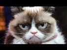 https://www.noelshack.com/2018-07-1-1518467805-grumpycat.jpg