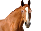http://image.noelshack.com/fichiers/2018/16/1/1523904439-cheval-larry.png