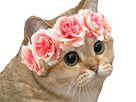 http://image.noelshack.com/fichiers/2018/16/2/1523919546-flowercat.png