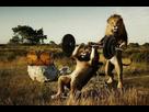 http://www.noelshack.com/2018-17-1-1524471491-sport-lion.jpg