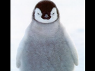 http://image.noelshack.com/fichiers/2018/21/3/1527071898-penguin.jpg