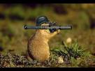 https://www.noelshack.com/2018-23-6-1528546361-marmotte-de-combat.jpg