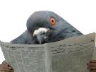 http://image.noelshack.com/fichiers/2018/25/5/1529689951-pigeon-journal.png