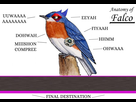 http://www.noelshack.com/2018-27-2-1530586039-anatomy-of-a-melee-falco-super-smash-brothers-know.png