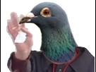 https://image.noelshack.com/fichiers/2018/27/7/1531084599-rasistas-pigeon-salut.png