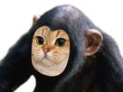 http://image.noelshack.com/fichiers/2018/28/4/1531415265-chat-singe.png