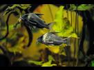 Ménagerie, plus de 3.000L d'aquariums - Page 18 1536918883-test-0006