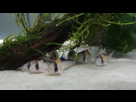 Ménagerie, plus de 3.000L d'aquariums - Page 18 1536918886-test-0003