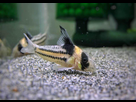 Ménagerie, plus de 3.000L d'aquariums - Page 18 1536919015-test-0018