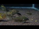Ménagerie, plus de 3.000L d'aquariums - Page 18 1536919030-test-0016