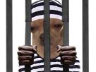 https://image.noelshack.com/fichiers/2018/43/4/1540477264-chien-blase-prisonnier.png