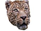 https://image.noelshack.com/fichiers/2019/03/2/1547579593-jaguar.jpg
