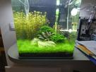 Nanocube 60L Dennerle - Shrimp home 1548350530-p1000022