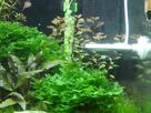 Nanocube 60L Dennerle - Shrimp home 1548356372-p1000023
