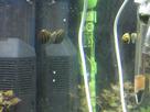 Nanocube 60L Dennerle - Shrimp home 1548356488-p1000024