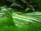 Nanocube 60L Dennerle - Shrimp home 1548356692-p1000025