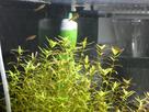 Nanocube 60L Dennerle - Shrimp home 1548356916-p1000026