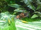 Nanocube 60L Dennerle - Shrimp home 1548357670-p1000031
