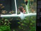 Nanocube 60L Dennerle - Shrimp home 1548357785-p1000032