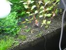 Nanocube 60L Dennerle - Shrimp home 1548358434-p1000036
